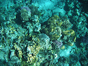 Underwater cameras test 2010  - Fujifilm FinePix XP10
