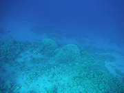 Underwater cameras test 2011 - Fujifilm FinePix XP30
